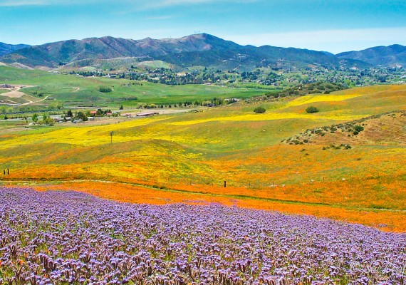 Springtime in Leona Valley